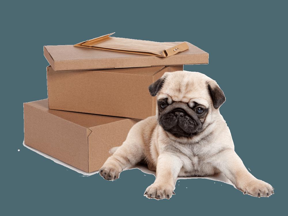 Pug_parcel_flats