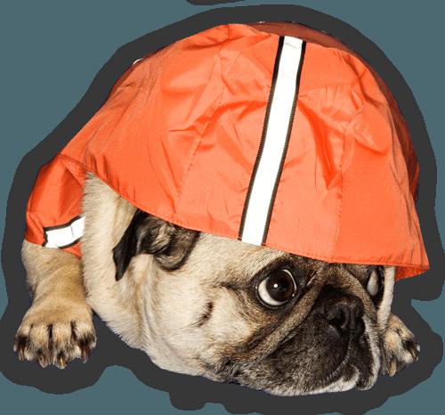 weather-pug_Cutout