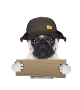 pug w box