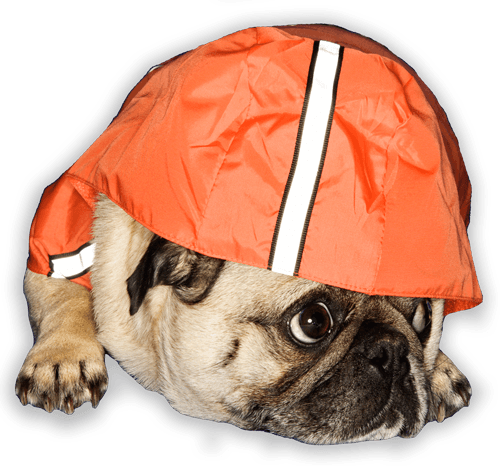 weather-pug_Cutout